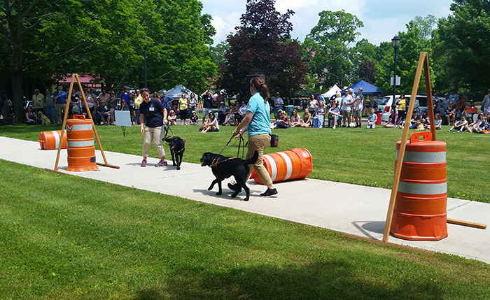 Guide dog instructors give a training demo at an event.