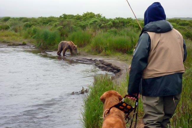 A guide dog team on an Alaskan fishing trip watch a brown bear in the distance.