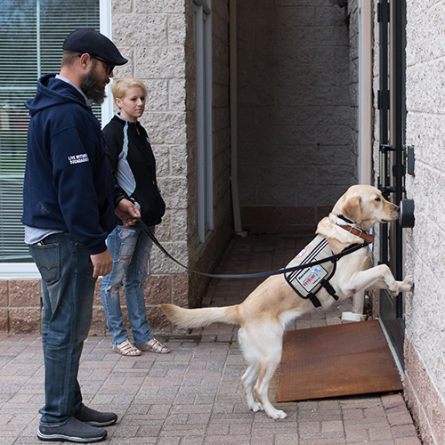 A service dog pushing the door button with its nose.