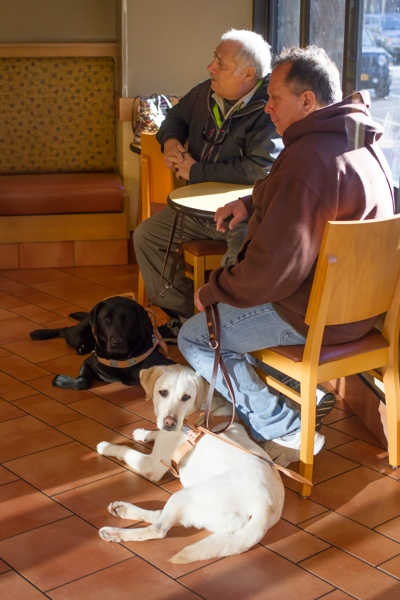 Two guide dog handlers at a cafe with their guide dogs.