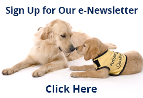 Email newsletter sign up. Two yellow labs laying down.