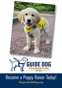 A yellow lab pup on the cover of our puppy brochure.
