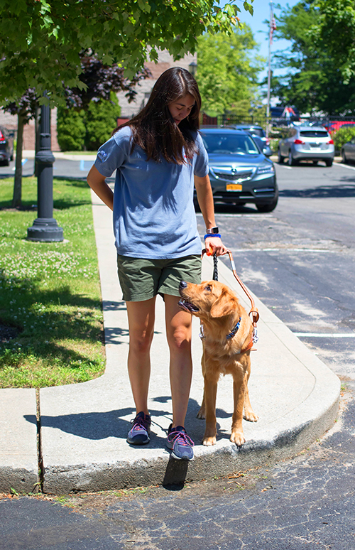 A GDMI works on curb work with her guide dog in-training.