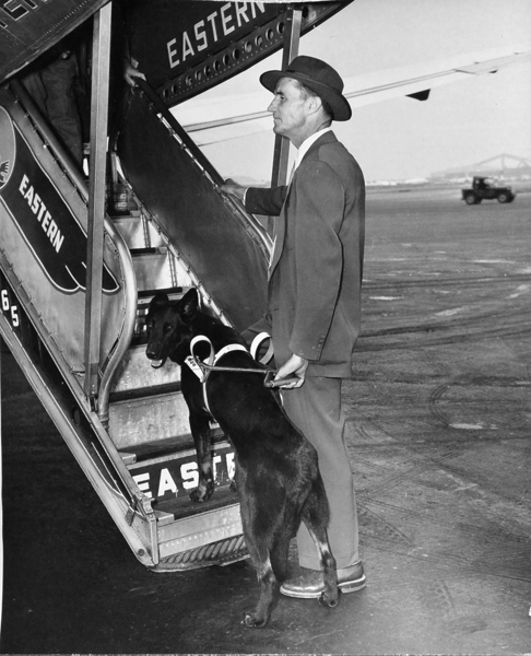 A handler and his guide dog walk up the stairs to an Eastern Airline airplane.