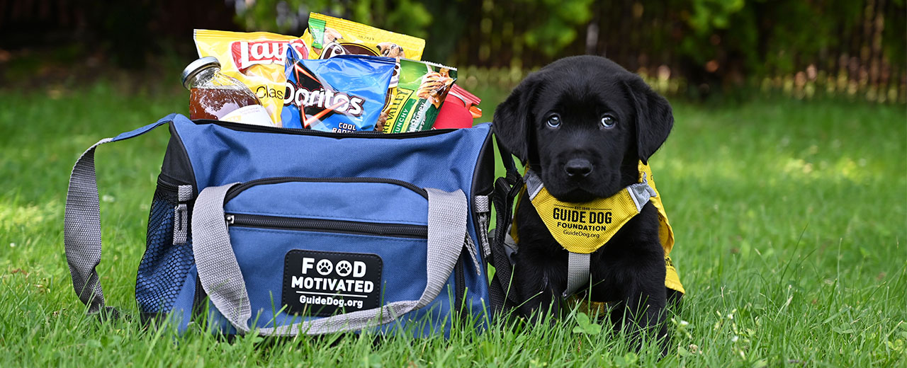 Food Motivated cooler with black lab pup next to it.