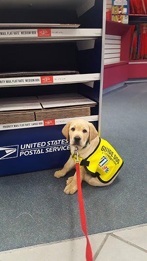 Izzy at the post office.