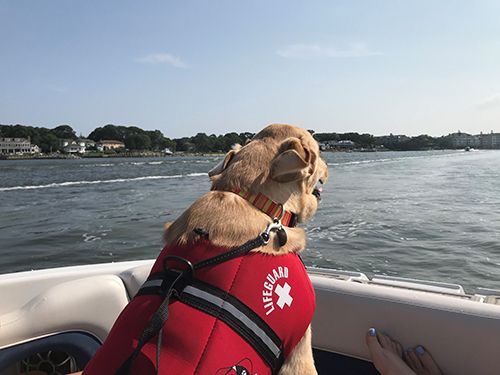 Sunny cruising on a boat.