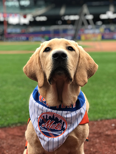 Sunny sitting on the field at Citi Field prior to a Mets games