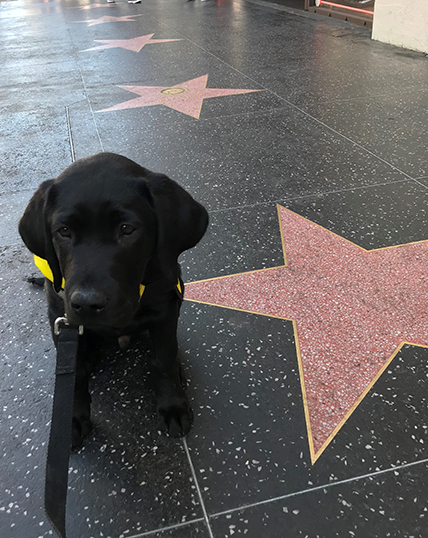 Zuma sitting by a star at the walk of fame.