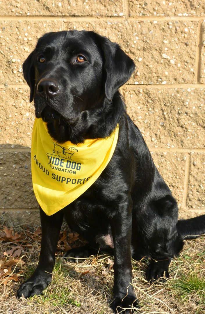 Guide Dog Foundation Yellow Pet Bandana